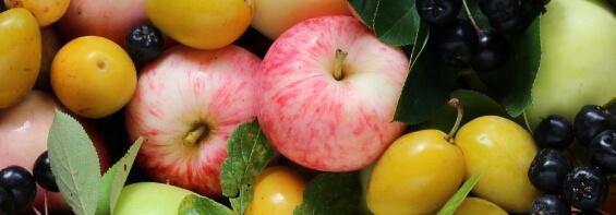 hurtownia owoców