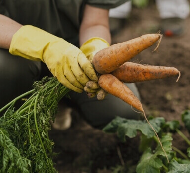hurtownia seliga oferta dla rolników i plantatorów