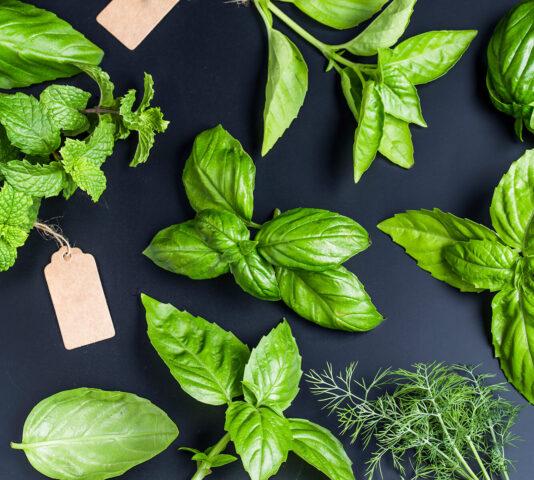 Dlaczego warto promować świeże zioła?